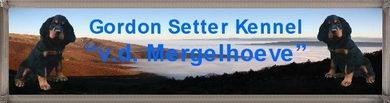 Gordon Setter Pedigree...